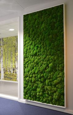 Indoor moss wall in an office space                                                                                                                                                                                 More