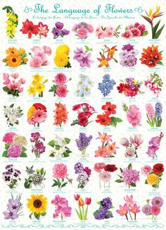 """The Language of Flowers is a 1000 piece jigsaw puzzle from EuroGraphics. Puzzle measures 19.25"""" x 26.625"""" when complete."""