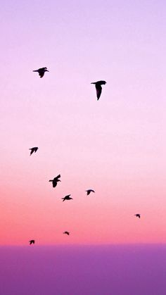 Birds Flying In Purple Sunset #iPhone #6 #wallpaper