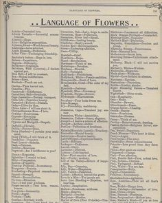 Learn the Victorian Meaning of Flowers + FREE vintage printables! – Bev Rainey Learn the Victorian Meaning of Flowers + FREE vintage printables! The Language of Flowers [free vintage printable] Book Writing Tips, Writing Prompts, Flower Meanings, Herb Meanings, Plant Meanings, Language Of Flowers, Things To Know, Writing Inspiration, Good To Know