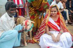 Halau Roh Jahat, Gadis India Nikahi Anjing - Warta Cinta
