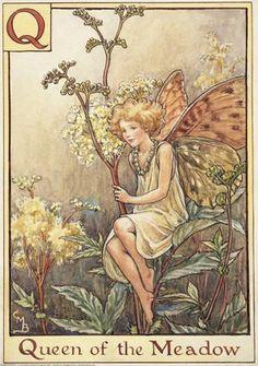 Postcard - The Queen of Meadow Fairy - A Flower Fairy Alphabet Q - Cicely Barker