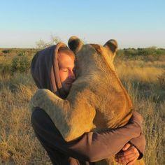 L'homme et l'animal  BOTSWANA, Gaborone. Sirga, une lionne adulte enlace l'Allemand Valentin Gruener qui, avec son ami Mikkel Legarth, l'ont sauvée à la naissance après qu'elle ait été exclue de sa portée, le 5 novembre 2013. Sirga est maintenant la star du projet Wildlife Modisa, fondée au Botswana par Valentin et Mikkel dans l'espoir de sauver d'autres lions. Caters News Agency