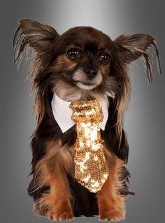 Hundekostüm Krawatte ♥ bei Kostümpalast.de