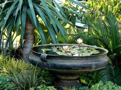 water fountains - I love any water features in a garden and so do the birds.
