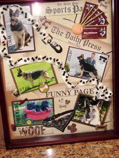 dog breeder shadow box