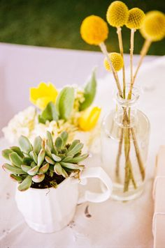 Billy buttons and succulents