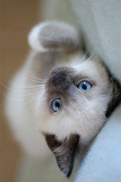 ...blue eyes....