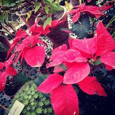 Ботанический сад / Botanical Garden (Санкт-Петербург, Санкт-Петербург)