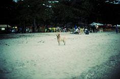 Cane #paraty #dog