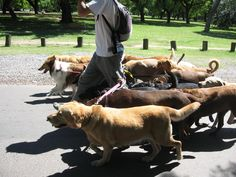 How to Start a Dog Walking Business - Part One: The Basics