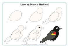 Learn to Draw a Blackbird