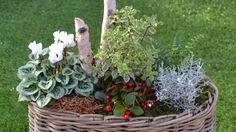 Idées pour vos jardinières ! - 290