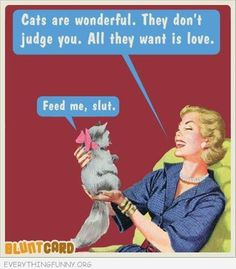 funny ecards blunt cards cats are wonderful they do't judge you they just want love feed me bitch