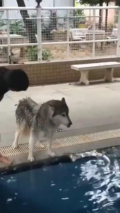 Cute Animal Videos, Funny Animal Pictures, Silly Dogs, Funny Dogs, Cute Little Animals, Cute Funny Animals, Cute Puppies, Cute Dogs, I Love Dogs