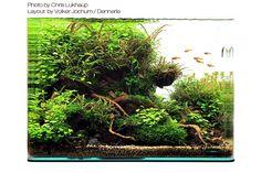 Betta Aquarium, Nano Aquarium, Nature Aquarium, Aquarium Design, Planted Aquarium, Amazing Aquariums, Nano Tank, Tanked Aquariums, Fish Ponds