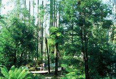 forest park design - Google Search