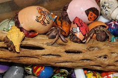 #hermitcrabs #capemay #celebratecapemay #pets #shells #crabs