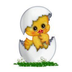 tojás csibe - Google keresés
