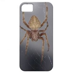 Garden Orb Weaver Spider iPhone 5 Case