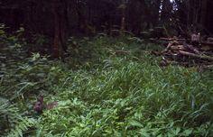 Cornered #wildlife - http://anenglishwood.com/?p=9696