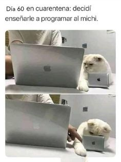 Best Memes, Funny Memes, Funny Cats, Funny Animals, Lol, Humor, Macbook, Animales, Frases
