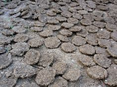 Each cake is about 8 inches in diameter. They are sun dried. Firewood and cow dung cakes are a source of domestic fuel in thousands of rural households in India.
