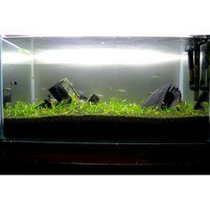 My iwagumi tank aquascape.
