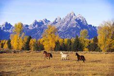 running horses - Google Search