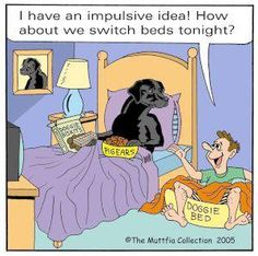 Black lab  #dog #humor