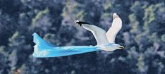Whale, Bird, Animals, Whales, Animales, Animaux, Birds, Animal, Animais