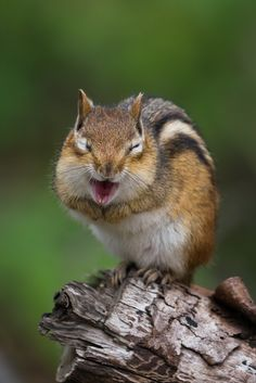 You cunny funt Cute Funny Animals, Funny Animal Pictures, Beautiful Creatures, Animals Beautiful, Animals And Pets, Baby Animals, Cute Squirrel, Squirrels, Animal Facts