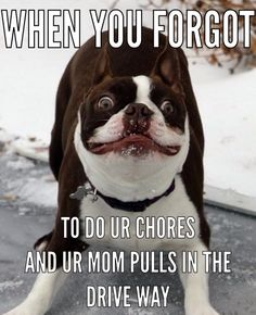 [Slideshow] Boston Terrier Memes Sure To Make You Smile Boston Terriers, Boston Terrier Love, Terrier Dogs, Funny Animal Pictures, Funny Animals, Cute Animals, Happy Animals, Funniest Animals, I Love Dogs