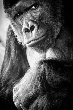 Self-esteem by Alex Bykov | My Photo | Scoop.it