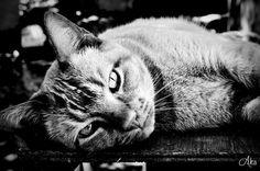 #chat #cat #summer #pause #regard #noiretblanc #photooftheday #nikonphotography #toutdoux #nikon3100