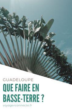 #guadeloupe #basseterre #top Plants, Top, Earth, Flora, Plant, Crop Shirt, Planting, Blouses