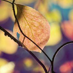 A leaf in Fall.
