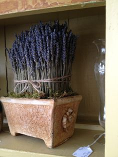 Hand-crafted Dried French Lavender hedge