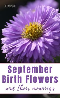 Every month has a birth flower, each with it's own special meaning. Here we take a look at the September birth flower - Aster and Morning Glory. #flowers #floralgifts #growingfamily