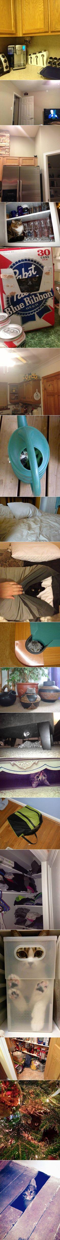 Manche Katzen werden als Kätzchen von der NSA rekrutiert und ausgebildet. Sie werden dann in ...