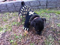 #Saints #Dog #NOLA