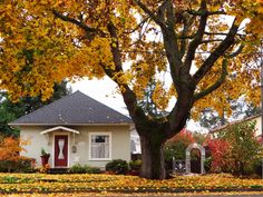 fall leaves, huge tree and adorable little house