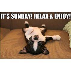Sunday has me feeling like...... Enjoy your Sunday Funday Hooligans! #Meme #Funny #Sunday #Relax #Enjoy #RockTheRag