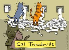 cat treadmill..my cat was doing this just today!!!vr