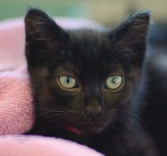 Tookie was adopted on 6/21/14 at our Adopt-a-Thon! #PHSAdoptaThon