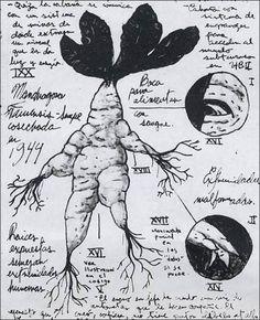 Guillermo del Toro's original sketches for Pan's Labyrinth