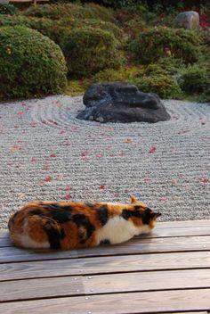 """枯山水 / 金福寺 Hopefully this cat won't """"mess up"""" the garden!"""