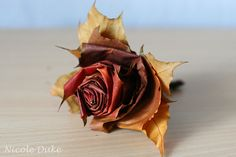 a rose made from the maple leaf