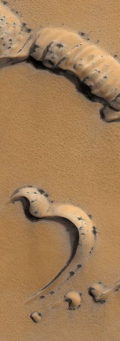 Sand ridges, 200 miles directly above the Martian surface. This image was taken by the Mars Reconnaissance Orbiter on Jan. 27, 2010. The black spidery flecks dotting the ridges, mostly on the sunny side, appear every spring and disappear every winter. Michael Benson/ NASA/JPL/ University of Arizona/Kinetikon Pictures