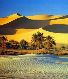 Sahara desert and oasis